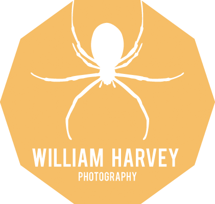 William Harvey – Wildlife and Nature Photographer