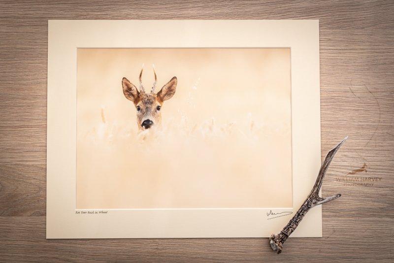 Matted Print Roe Deer
